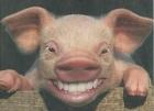 Nguy cơ tìm ẩn từ thịt lợn